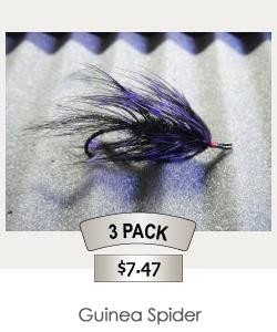 3pack_Guinea_Spider